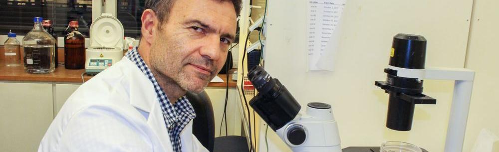 Forsker Fahri Saatcioglu ved Institutt for biovitenskap på Universitetet i Oslo (UiO) sittende ved mikroskop. Foto.