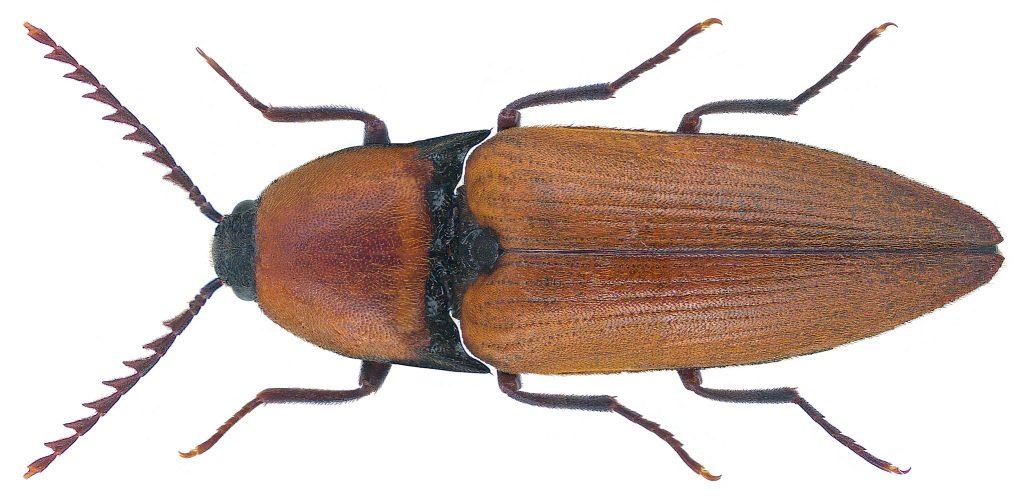 Bilde av insekt.